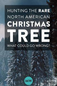 Hunting the Rare North American Christmas Tree